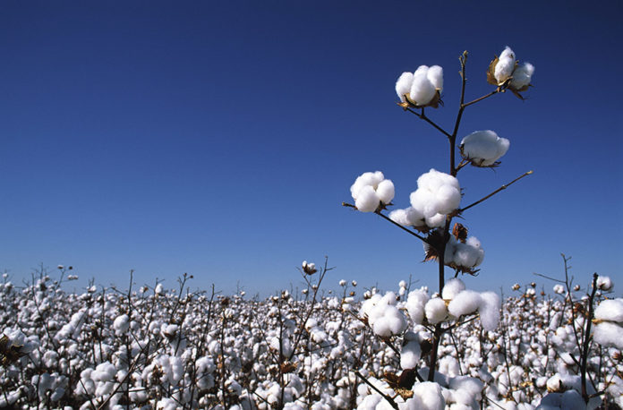 Wrangler Cotton